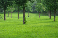 Lawn in woods Royalty Free Stock Photos
