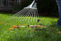 Lawn Work. Woman is raking leaves on lawn in her back yard Royalty Free Stock Photos
