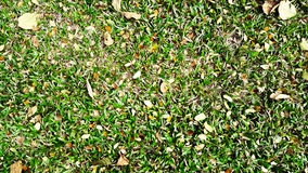 Lawn yard Royalty Free Stock Photography