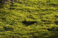 lawnmosstorv Royaltyfri Fotografi