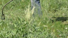 Lawnmower man mows grass weed stock video