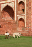 Lawnmowers at the Taj Mahal Stock Photos