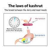 The laws of kosher. The break between the dairy and meat meals. Kosher dairy products in the stomach. Kosher meat Royalty Free Stock Image