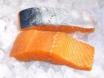 Lax - fisk på is royaltyfri fotografi