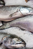 Lax på is på fiskmarknaden Fotografering för Bildbyråer