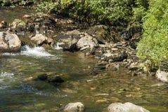 Laxar i den Ketchikan liten vikfloden Arkivfoton