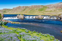 Laxfoss waterfall in Iceland Royalty Free Stock Images
