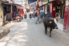 LAXMAN JHULA, INDIA - APRIL 20, 2017: Street view in Laxman Jhula India Royalty Free Stock Photography