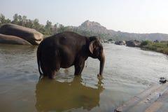 Laxmi elefanten av den hinduiska templet med floden Arkivfoton