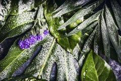 Lay-out van groene tropische bladeren met purpere bloemen en waterdalingen royalty-vrije stock afbeelding