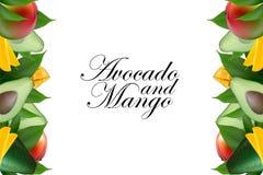 Lay-out van het fruit de creatieve malplaatje die van avocado, mango, papaja en bladeren wordt gemaakt De achtergrond van het voe vector illustratie