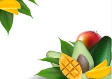 Lay-out van het fruit de creatieve malplaatje die van avocado, mango, papaja en bladeren wordt gemaakt De achtergrond van het voe stock illustratie