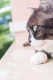 Laydown кота для фото всхода Стоковое Фото