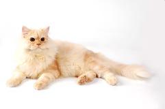 Laydown lindo del gato Imagenes de archivo