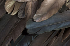 Layer of Birds Feathers Showing Various Colors Stock Photography