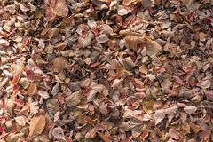 Layer of fallen leaves covering ground in autumn. Layer of fallen leaves covering the ground in autumn Royalty Free Stock Image
