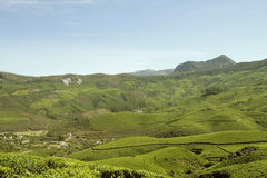 Layer of green. The green tea plantations captured at some distance away from Munnar Royalty Free Stock Photography
