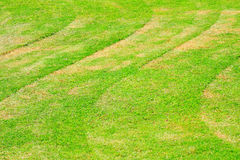 Layer of green grass Stock Photography