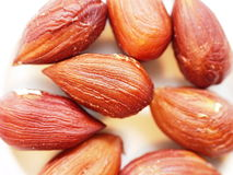 Layer of hazelnut seeds. Closeup look of layer of hazelnut seeds royalty free stock photography