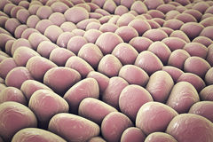 Layer of human cells Royalty Free Stock Photography