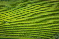 Layer of rice fields and terrace on golden sunshine royalty free stock photos