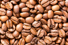 Layer of roasted coffee beans  Royalty Free Stock Image