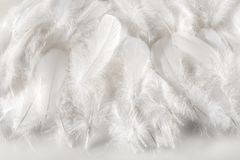 Layer of soft fluffy white feathers Stock Photo