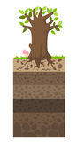 Layer of soil beneath the tree Royalty Free Stock Photo