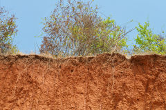 Layered cut of soil. Royalty Free Stock Photo