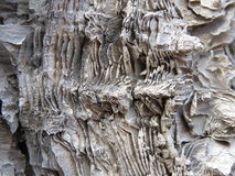 The layered structure of the cortex relic birch Stock Photo
