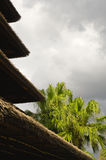 Layered thatch roof and palms Royalty Free Stock Image