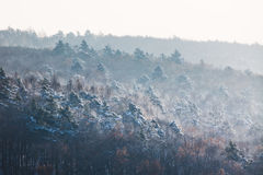 Layered trees on a distant hills. In winter covered in snow stock images