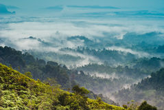 Layers of Forest. Layers of clouded forest from malaysia Stock Photo