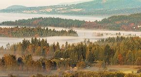 Layers of Forest With Fog in Between Royalty Free Stock Images