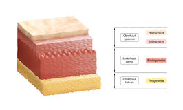 Layers Of Human Skin - German Labeling. Cross-section illustration of human skin, composed of three primary layers: epidermis, dermis and subcutis. German stock illustration