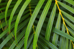 Layers of lush green palm fronds. Weave together in Kauai, Hawaii stock photos