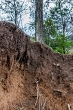 Layers of soil wet soil roots in soil soil profile soil zones tr stock image