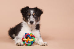 Laying border collie puppy with a toy Stock Images