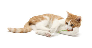 Laying cat Stock Photo