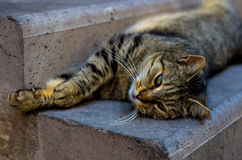 Laying cat resting on stairs Royalty Free Stock Images