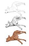 Laying dog Stock Image