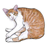 Laying down cat.vector illustration Royalty Free Stock Photos