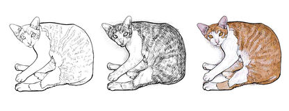 Laying down cat.vector illustration Stock Images