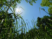 In a grassy meadow looking up at the sky royalty free stock image