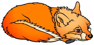 Laying Fox Royalty Free Stock Photo