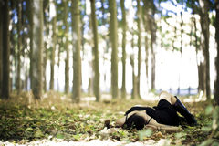 Laying girl on the forest. Young beautiful goth girl laying over the foliage stock images
