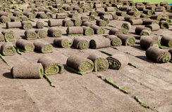 Laying of a grass rolled lawn at stadium Stock Photo