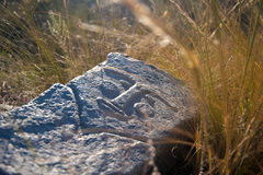 Laying idol. In the grass Royalty Free Stock Photo
