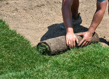 Laying sod. Man laying sod in a new yard stock images