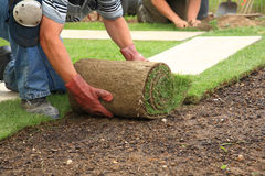 Laying sod for new lawn. Man laying sod for new garden lawn royalty free stock photo